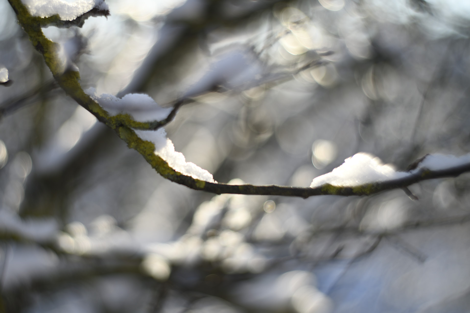 Petzval 85mm/2.8 foto Magnus Norden