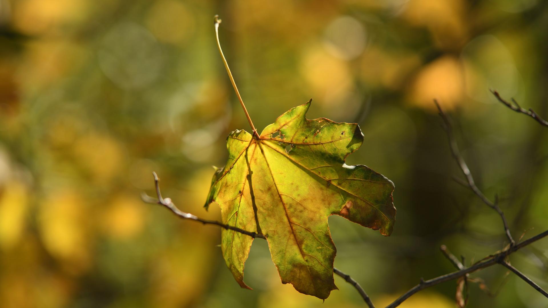 Autumn foto Magnus Norden